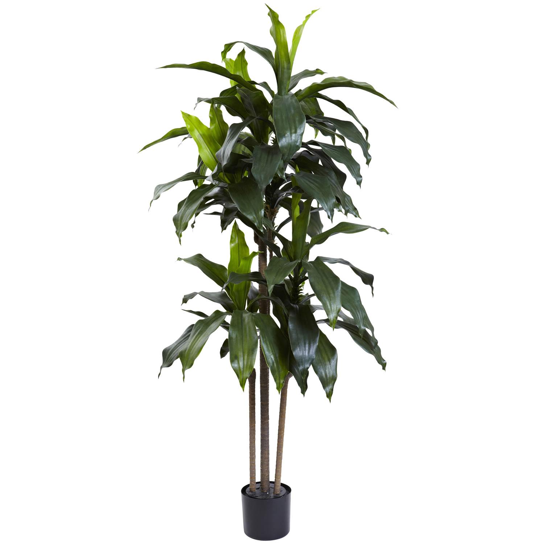 5' Dracaena Plant UV Resistant (Indoor/Outdoor)